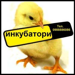 Инкубатори за люпене на яйца 05_1495458945